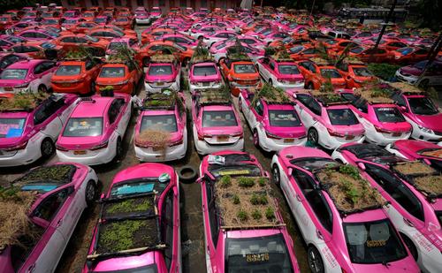 کاشت سبزه روی سقف تاکسی های بیکار شده در تایلند + عکس