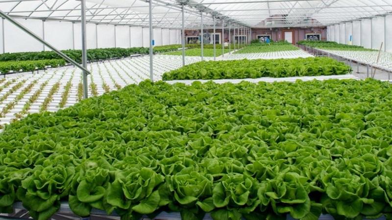 در باغچه خانهتان واکسن پرورش دهید/ واردکردن mRNA واکسن به گیاهان
