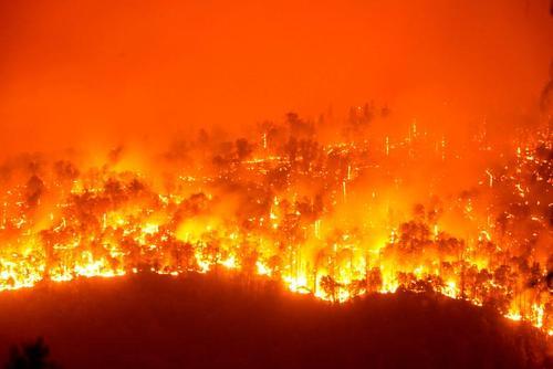اسب های نجات یافته از جهنم آتش در جنگل های کالیفرنیا + عکس