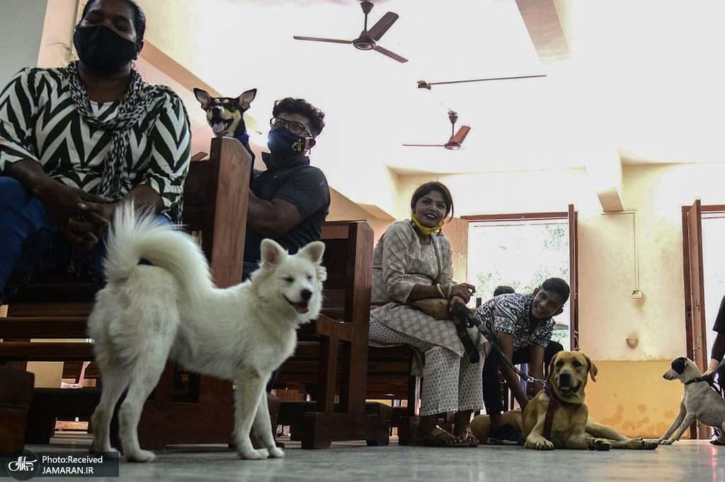 برگزاری مراسم برکت حیوانات در در بمبئی + عکس