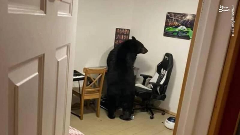 ورود بیاجازه خرس به خانه شهروند کانادایی! + عکس