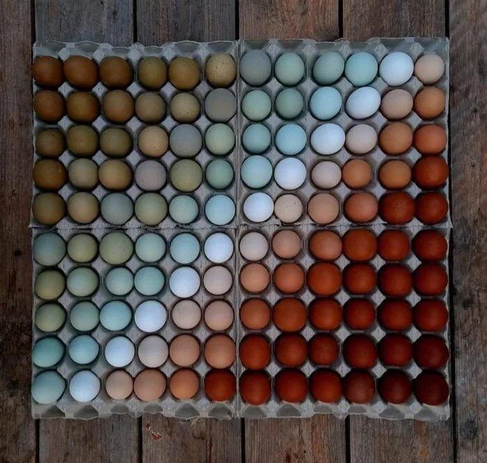 تنوع زیبای رنگ پوست تخممرغ + عکس