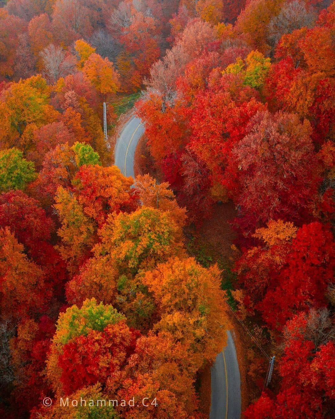 تصویری شگفتانگیز از پاییز در جنگلهای دراز نو + عکس
