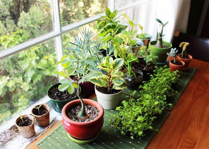 فواید جالب نگهداری گیاهان خانگی برای سلامت