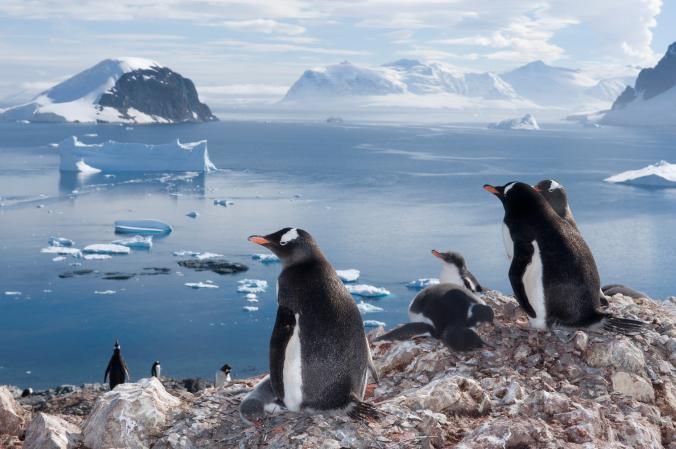 پنگوئن های مهاجر(nationalgeographic)