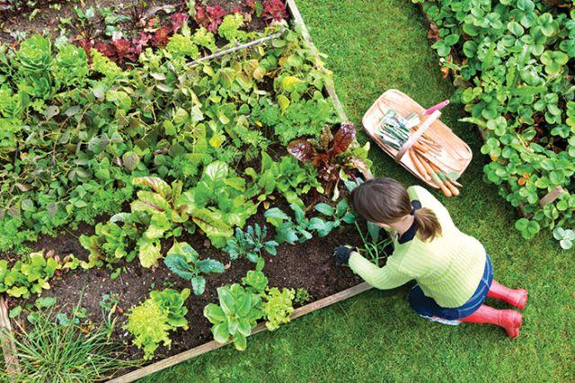 ایدههایی برای لذت بردن از فضای باغ و باغچه+عکس