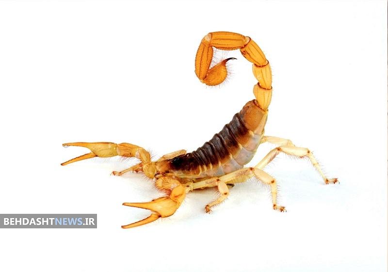 اگر دچار گزش حشرات یا جانوران شدیم چه کنیم؟
