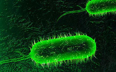 آلوده ترین عضو بدن کجاست+نحوه  صحیح شستشو