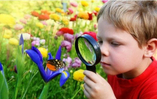 با حس کنجکاوی کودکان چه کنیم؟