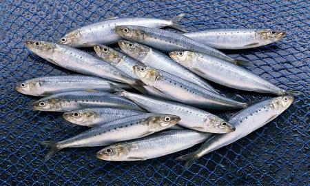 ماهیهای کدام منطقه ایران، سالمتر است؟
