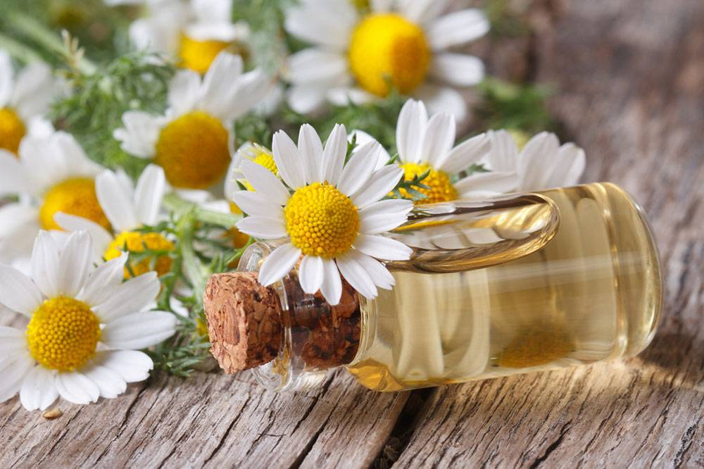 داروهای گیاهی مناسب برای رفع استرس