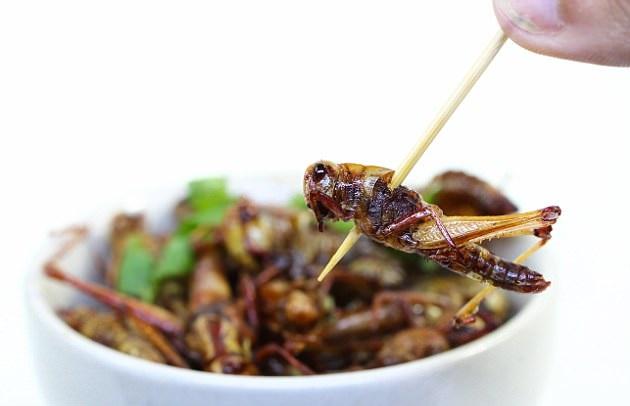 حشرات، منبعی سرشار از پروتئین در سبد غذایی آینده انسانها+تصاویر