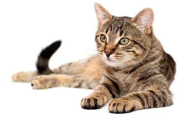 حیوان خانگی پر طرفدار که عامل ابتلا به سرطان و بیماری های عصبی است!