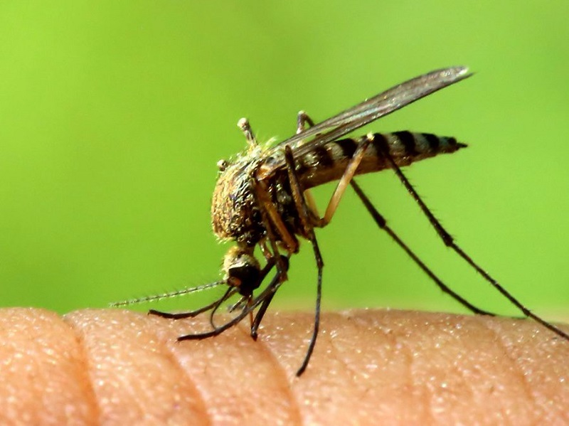 ارتباط ویروس زیکا با مشکلات عصبی در بزرگسالان