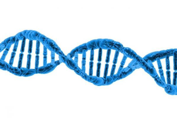 پروتئینها مانند مرورگرها، برنامههای افزودنی دارند