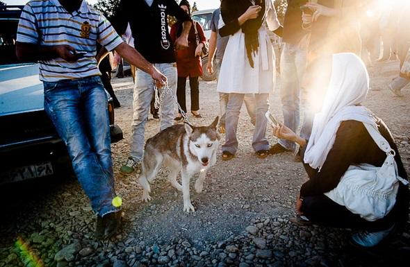 پرستاری از سگ، شغل جدید دختر جوان برای رهایی از تنهایی+عکس