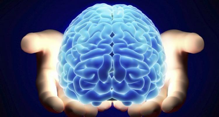سیستمی که مغز انسان به آن مجهز است