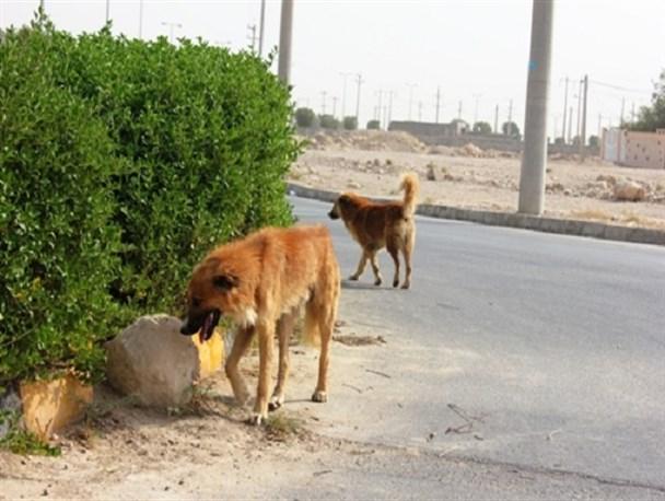 این بیماری در حاشیه دریای خزر، جنوب غربی و شمال شرقی ایران واگیر بیشتری دارد!