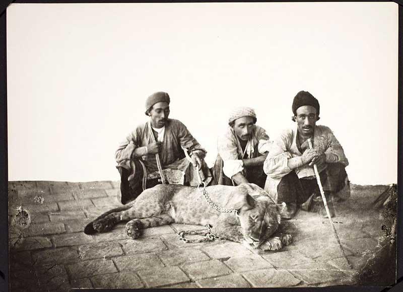 تنها عکسى که از شیر ایرانى باقیمانده است + عکس