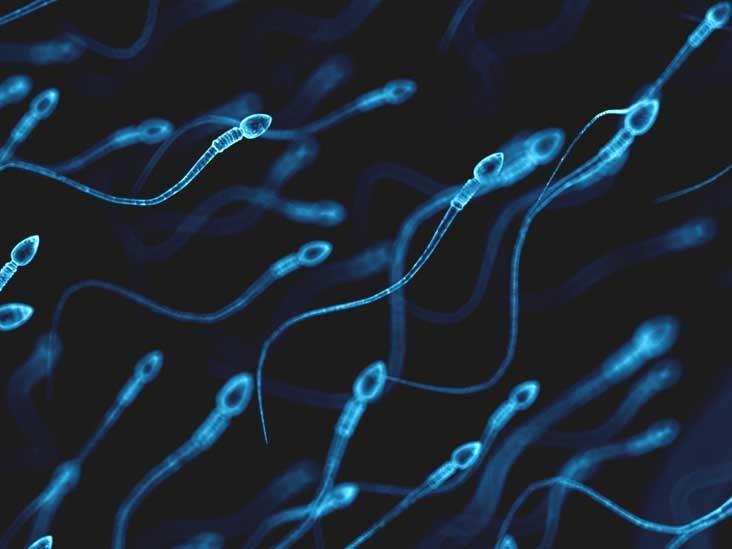 تعیین سن و میزان ناتوانی اسپرم