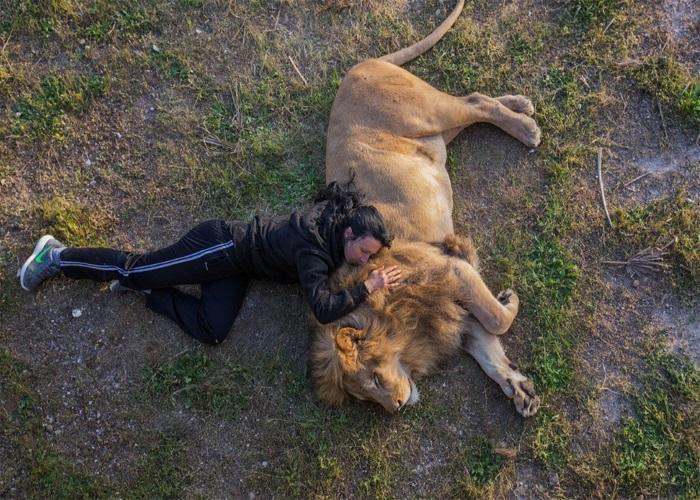 صحنه باور نکردنی از چرت نیمروزی یک جوان در کنار شیر+عکس