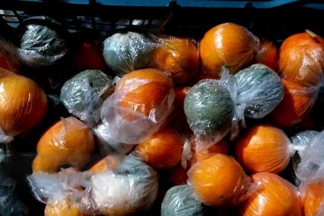 این پرتقال ها را هرگز نخورید!