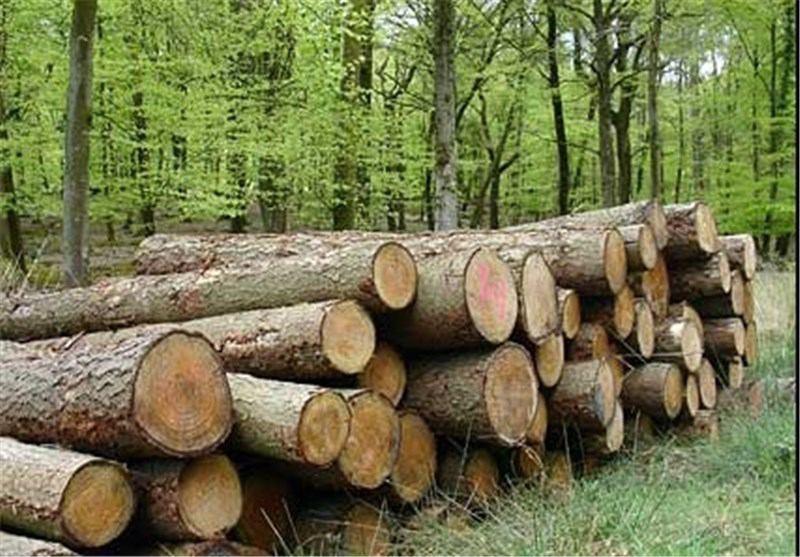 سرانجام طرح تنفس جنگل ها چه خواهد شد؟
