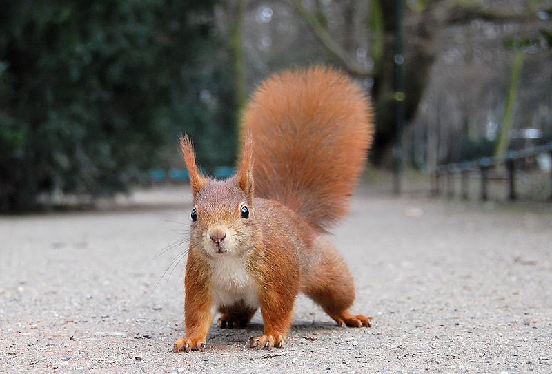 سنجاب ها به کمک بیماران مبتلا به سکته می آیند
