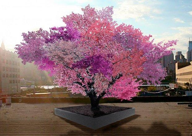 این درخت ۴۰ نوع میوه تولید میکند