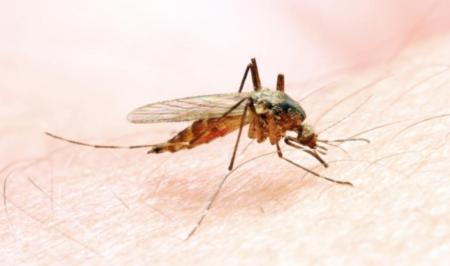 یک سم گیاهی جدید برای نابودی لاروهای ناقل مالاریا