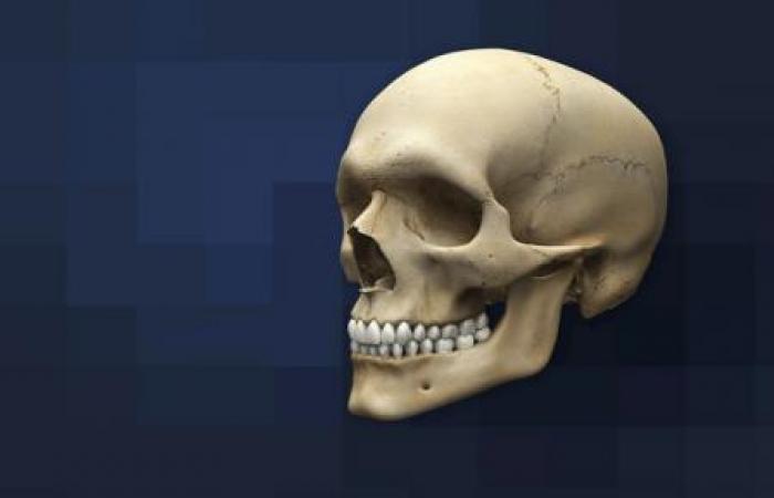 شکل جمجمه چه تاثیری بر عملکرد مغز دارد؟