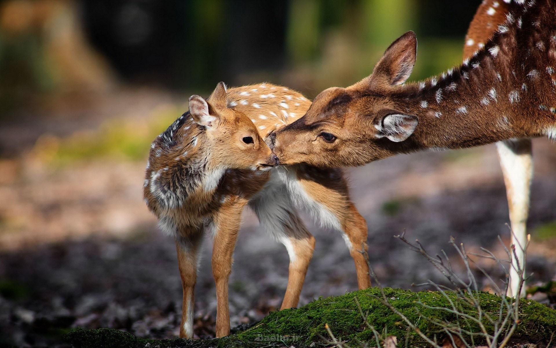 در فصل سرما از حیات وحش حمایت کنید