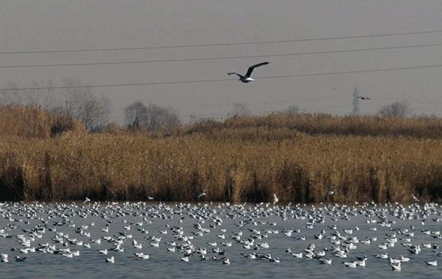 تبدیل تالاب های خوزستان به قتلگاه پرندگان مهاجر