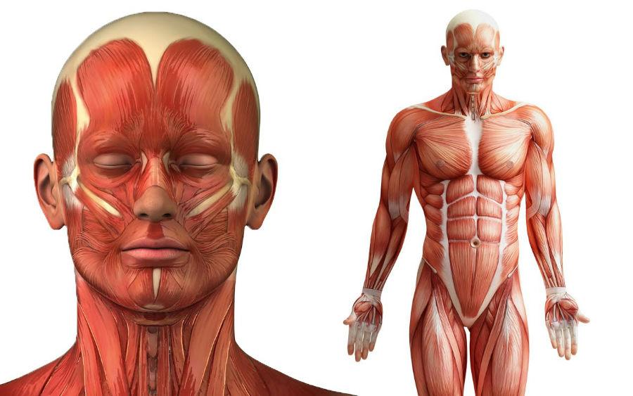 دانستنی های جالب در مورد بدن انسان