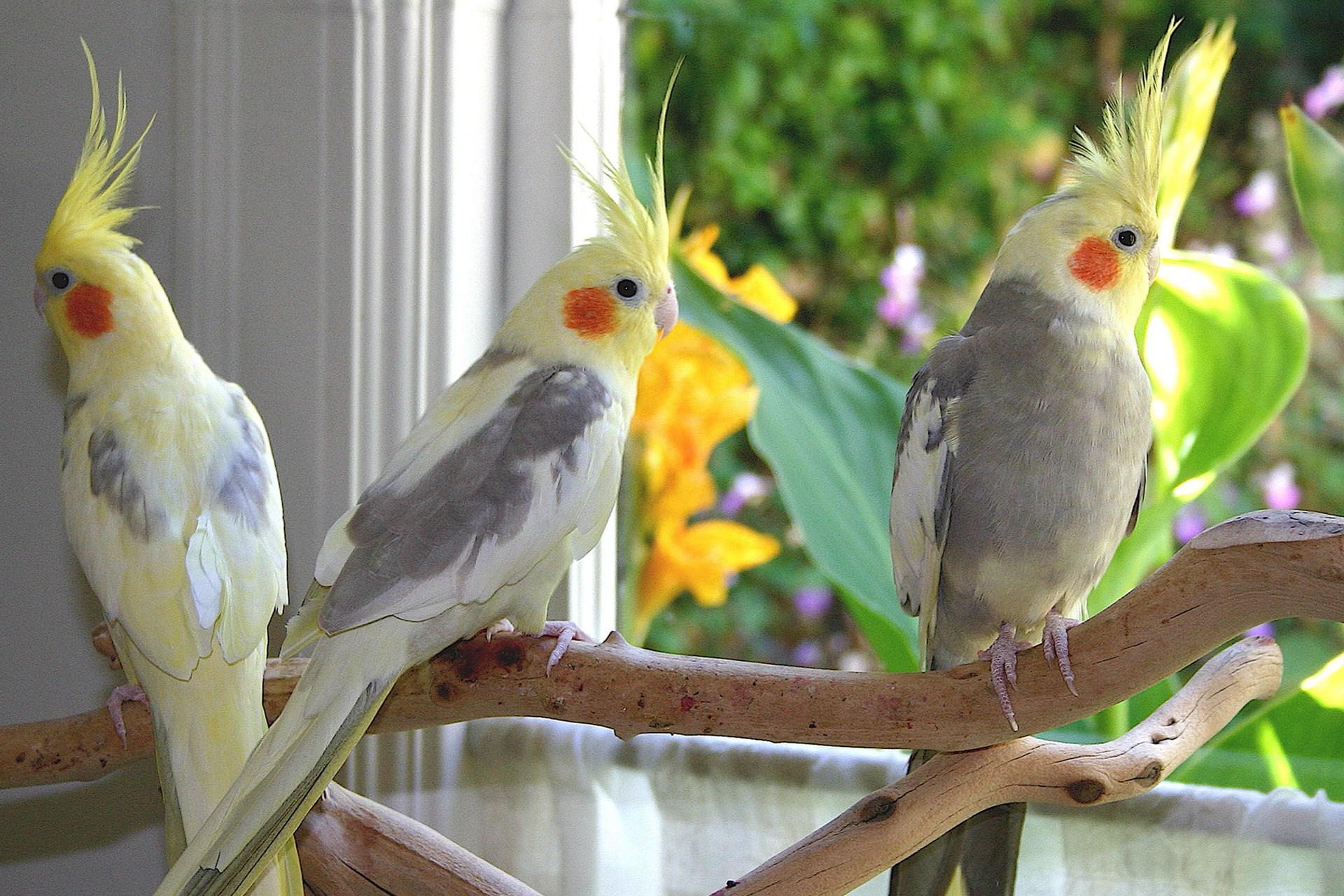 افرادی که حق نگهداری از پرندگان را ندارند