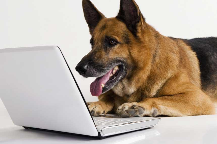 گفتگو با سگ ها به کمک هوش مصنوعی