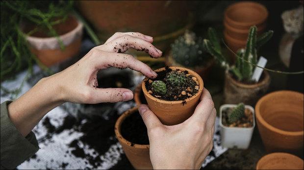باغبانی به حفظ سلامت سالمندان کمک می کند