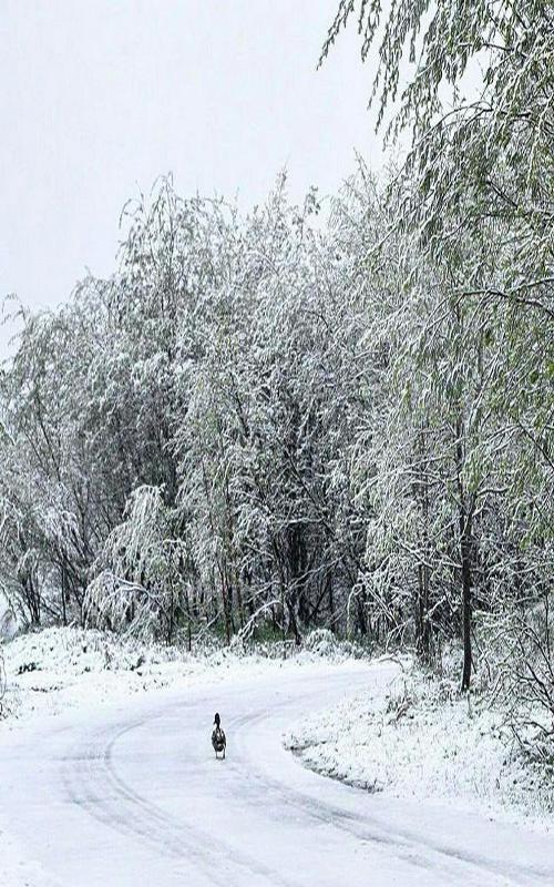 برف، باران و مهگرفتگی در استانهای شمالی کشور