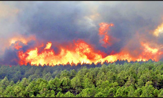 تاثیر آتش سوزی جنگل ها بر کیفیت هوای زمین