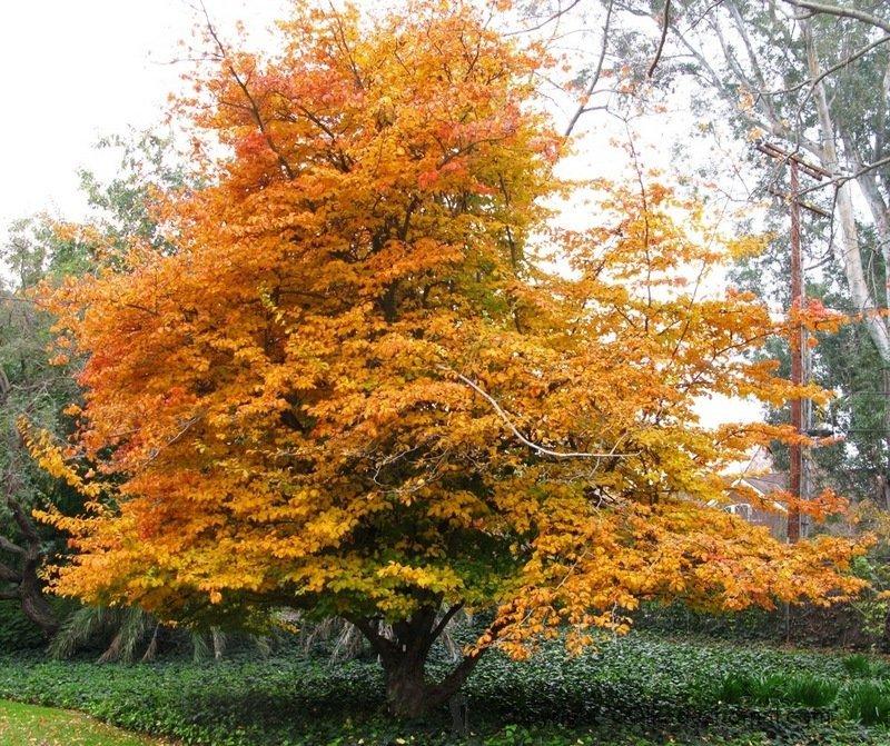 درخت انجیلی و فناوری نانو علیه آلودگی هوا