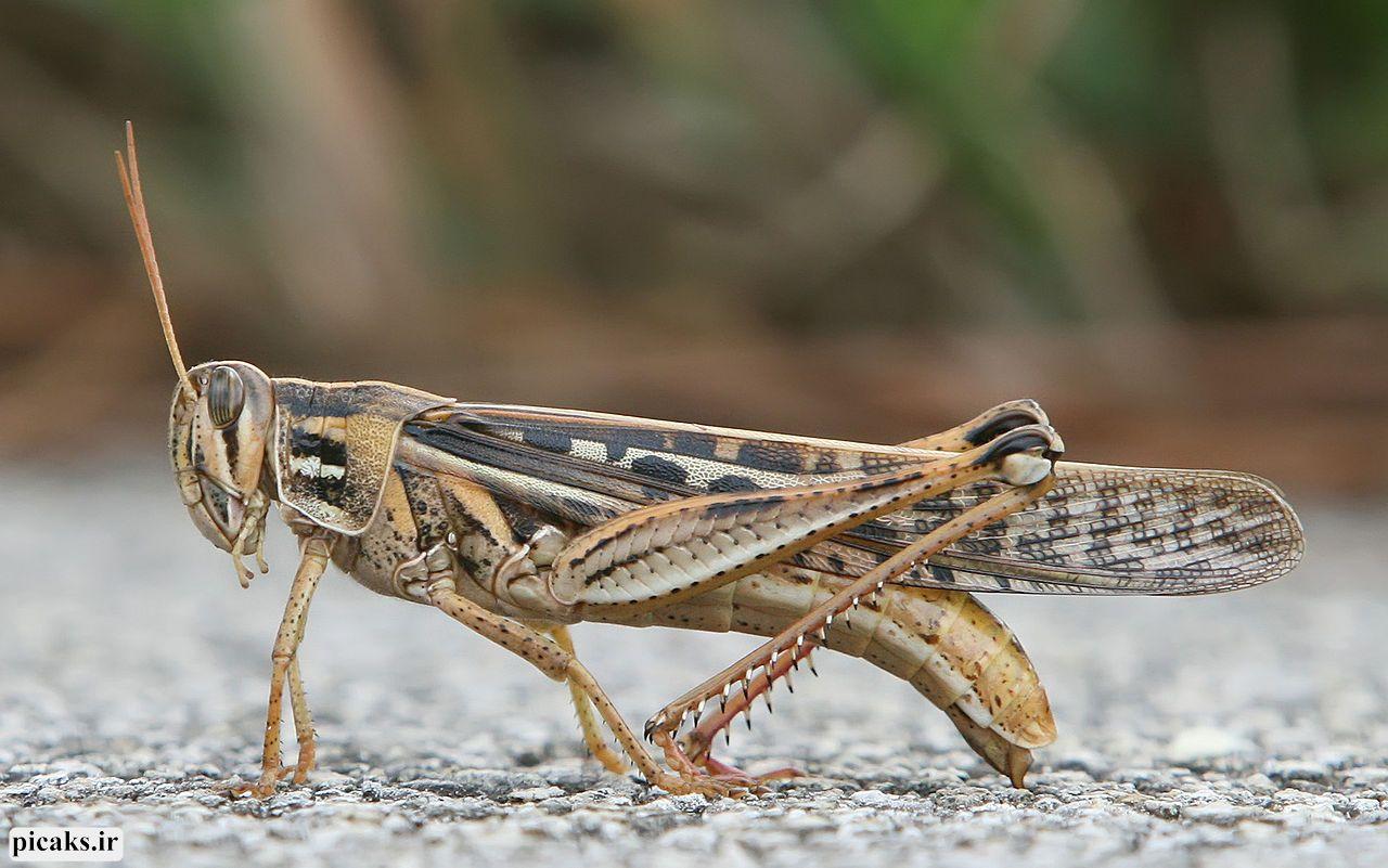این حشرات سودمند؛ از تغذیه تا کنترل بیماریها