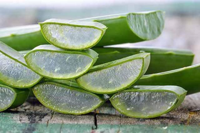 پسوریازیس را با این گیاه درمان کنید