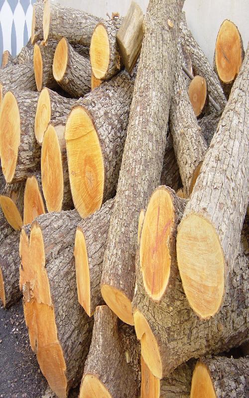کشف 10 تن چوب جنگلی قاچاق