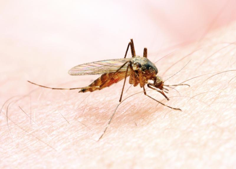 مهار مالاریای مقام به دارو با خمیردندان