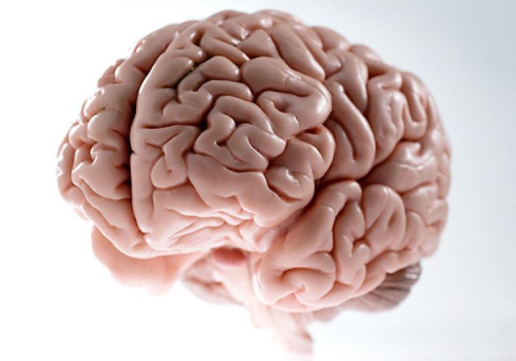 شناسایی نحوه تعادل مغز