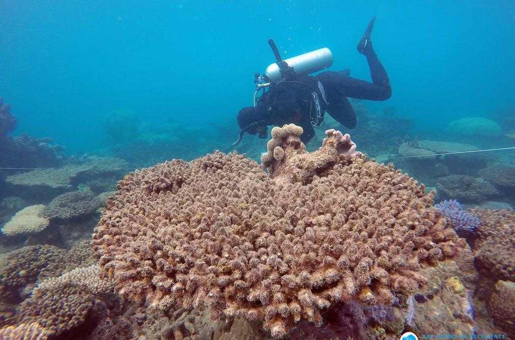 آموزش همگانی تنها راه نجات مرجان ها از خطر انقراض