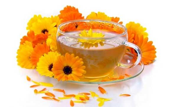 «گل همیشه بهار» در درمان بیماری ها غوغا می کند