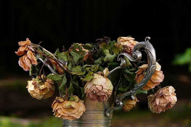 چرا نگهداری گل خشک در خانه خوب نیست؟