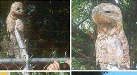 پرندهای با ظاهر عجیب در ونزوئلا! + عکس