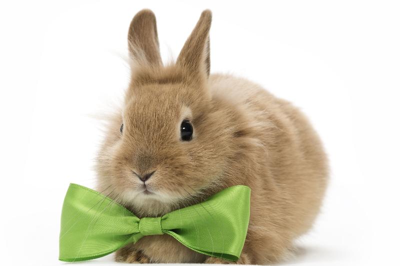 شرایط نگهداری خرگوش در منزل